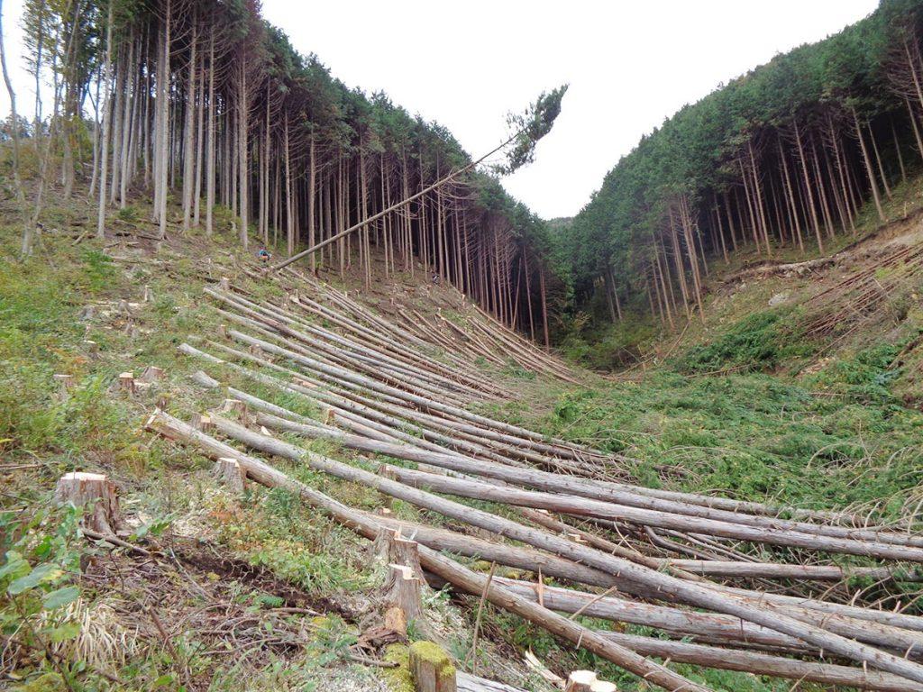 林産事業の様子3伐倒作業