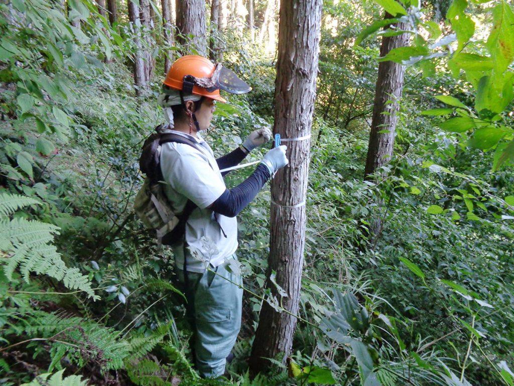 森林整備の様子2 選木